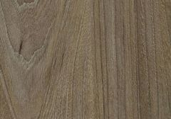 Brown Swiss Elm